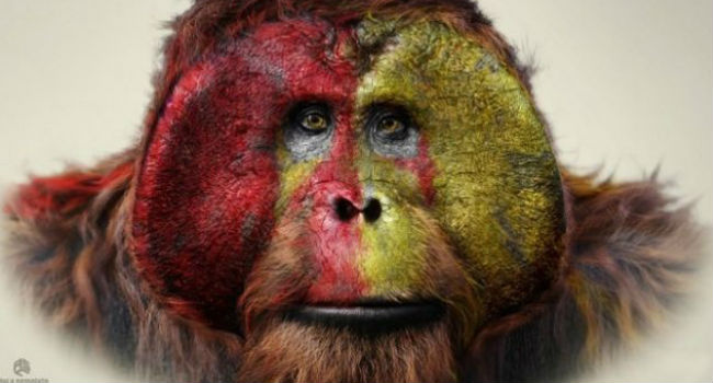 Maurice, orang-utan and third-in-command to Caesar, as well the intellectual leading light of the emerging ape civilisation (image via io9 (c) Aaron Sims Company)