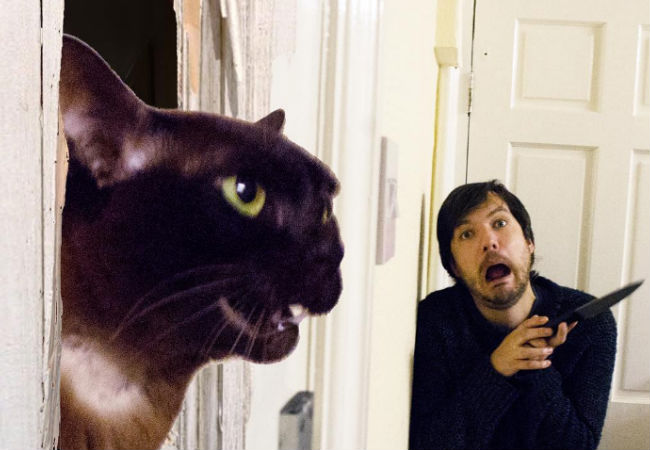 The Shining (image (c) Dave and Sarah, Movie Cats, Instagram)